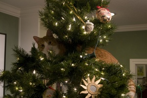 310-1169 Cats and the Christmas Tree