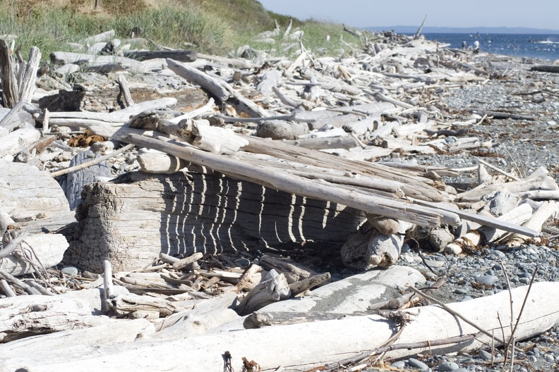 313-1700 Driftwood on Beach.jpg