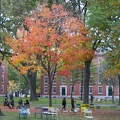 315-0624 Foliage in Harvard Yard.jpg