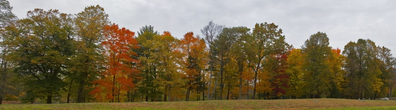 315-1772--1776 Foliage by the Old Manse_ Concord_ MA.jpg