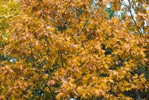315-2456 Foliage up close.jpg