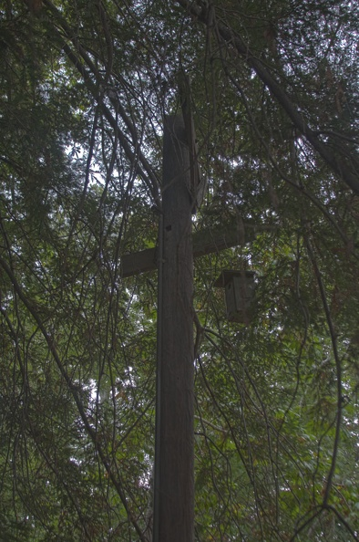 316-8015--8017 Bird House HDR2.jpg