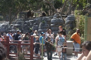 316-5009 San Diego Zoo - Takins overllook the line for the Pandas