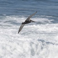 320-7858 Pelican and Surf