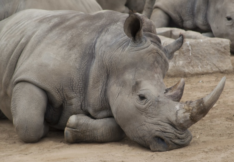 321-0256 Safari Park - White Rhino.jpg