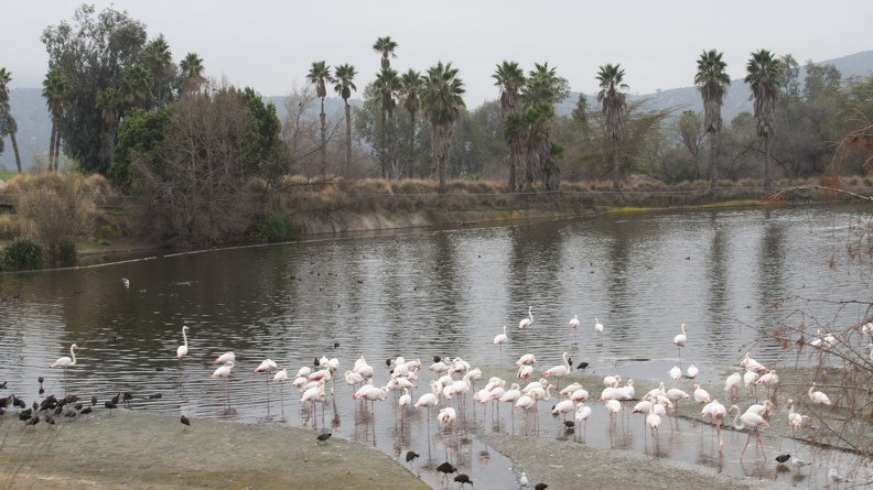 321-0768 Safari Park - Flamingos.jpg