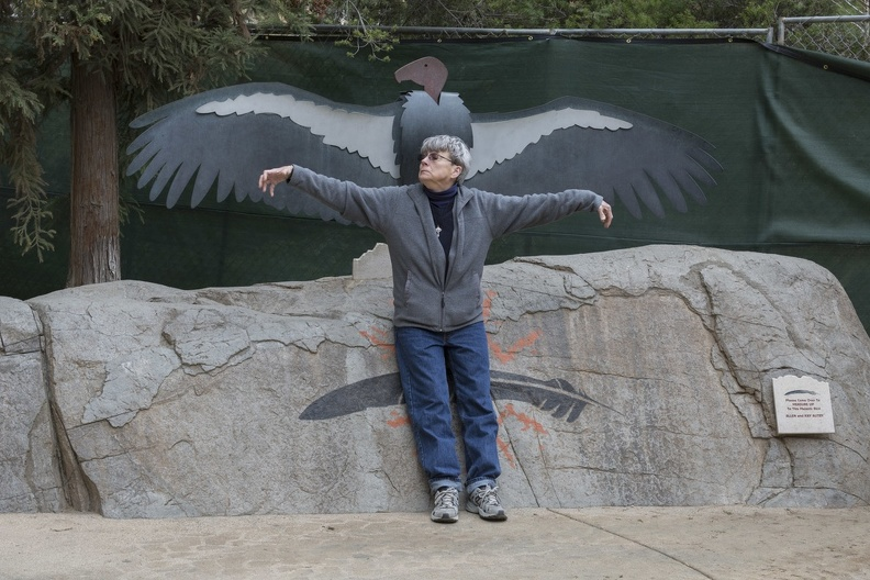 402-4706 Safari Park - Kate vs California Condor Wingspan.jpg