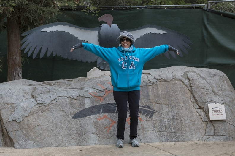 402-4710 Safari Park - Lynne vs California Condor Wingspan.jpg
