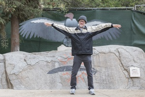 402-4718 Safari Park - Dick vs California Condor Wingspan