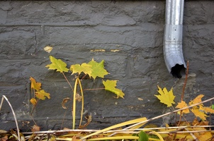 100_0579_Downspout.jpg