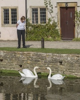 404-3855 Castle Combe Swans