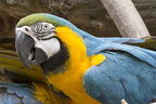 403-2610 Madison - Henry Vilas Zoo - Macaw