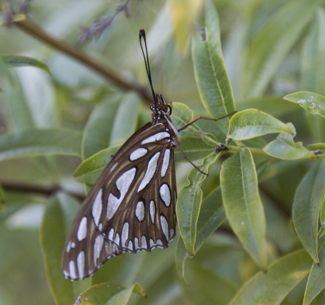 406-6028 Huntington - Butterfly.jpg