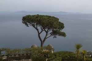407-3618 IT - Ravello - Villa Rufolo - Umbrella Pine