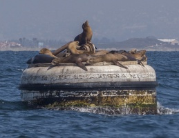 205-1589 San Diego Sailing - Sea Lions