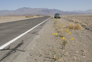 310-2633-Death-Valley-Wildflowers.jpg
