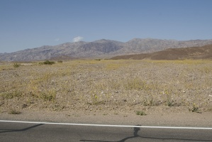 310-2642-Death-Valley-Wildflowers.jpg