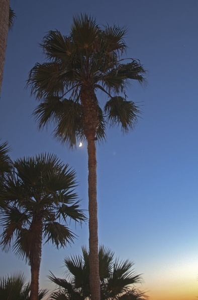 316-8442--8444  Laguna Beach Palm Moon HDR.jpg