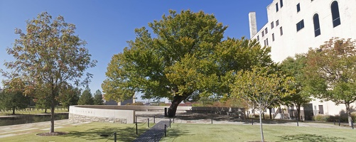 317-1804--1809 OKC Memorial Survivor Tree Panorama